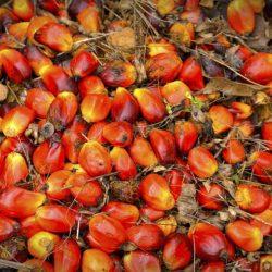 palmolie